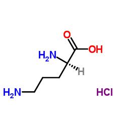 D-Ornithine Monohydrochloride